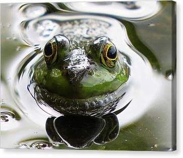 Frog Kiss Canvas Print by Dianne Cowen