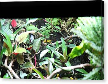 Frogs Canvas Print - Frog - National Aquarium In Baltimore Md - 12124 by DC Photographer