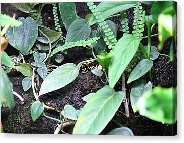 Frog - National Aquarium In Baltimore Md - 12128 Canvas Print by DC Photographer