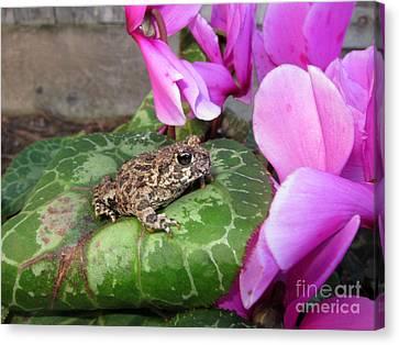 Frog On Cyclamen Plant Canvas Print by Debra Thompson