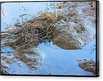 Frog Puddle Canvas Print