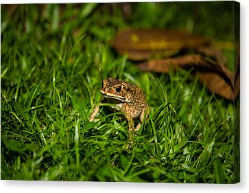 Canvas Print featuring the photograph Froggie by Mike Lee