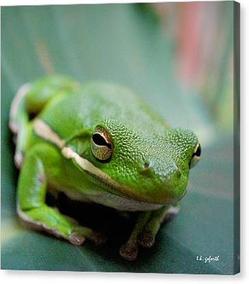 Froggy Smile Squared Canvas Print by TK Goforth