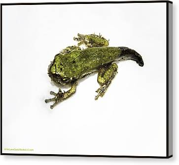 Frogs At Bear Creek Nature Park  Canvas Print by LeeAnn McLaneGoetz McLaneGoetzStudioLLCcom