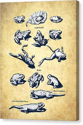 Old Wall Canvas Print - Frogs - Historiae Naturalis - 1657 - Vintage by Aged Pixel