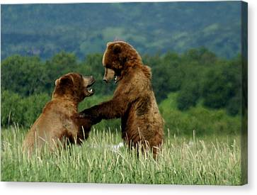 Frolicking Grizzly Bears Canvas Print by Patricia Twardzik