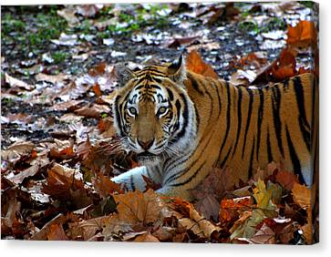 Frolicking In The Leaves Canvas Print by Jodi Terracina