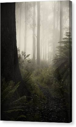 From Darkness Canvas Print by Amy Weiss