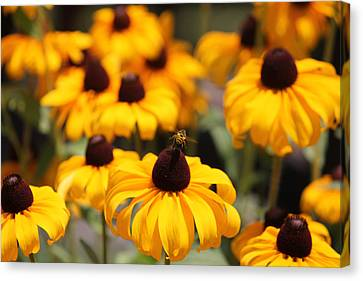 From Flower To Flower Canvas Print