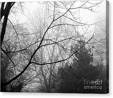 Canvas Print featuring the photograph From Hence We Come by Robyn King