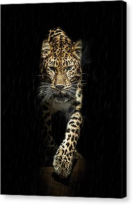 From Out Of The Darkness Canvas Print by Paul Neville