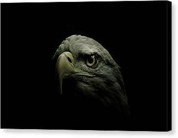 From The Shadows Canvas Print by Shane Holsclaw
