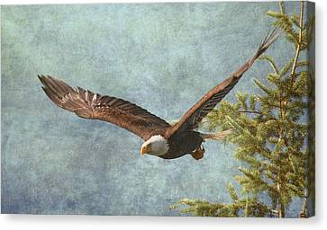 From The Tree Tops Canvas Print