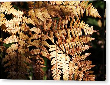 Frond Close Up Canvas Print