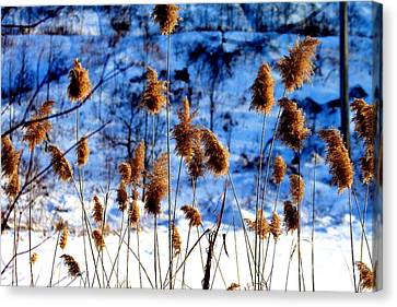 Canvas Print featuring the photograph Fronds In Winter by Eleanor Abramson