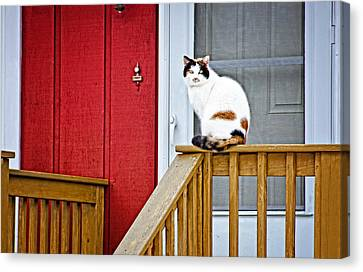 Front Porch Cat Canvas Print