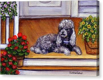 Front Porch Poodle Canvas Print