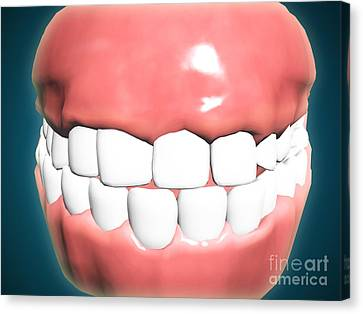 Front View Of Human Mouth With Teeth Canvas Print by Stocktrek Images