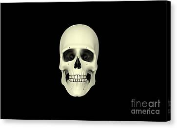 Front View Of Human Skull Canvas Print by Stocktrek Images