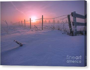 Frost And Fenceline Canvas Print by Dan Jurak
