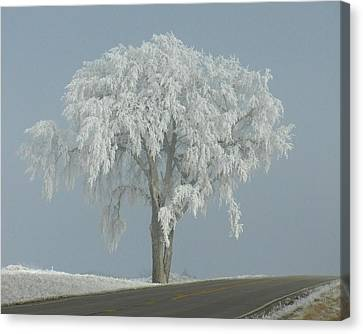 Frost Covered Lone Tree Canvas Print by Penny Meyers