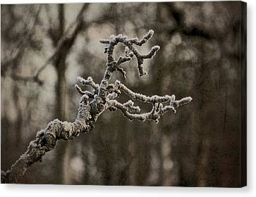 Frost Dragon Canvas Print by Odd Jeppesen