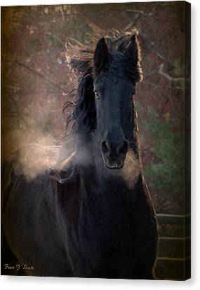 Frost Canvas Print by Fran J Scott