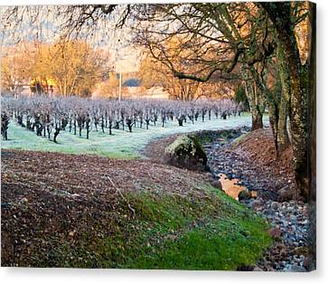 Sonoma County Canvas Print - Frost In The Valley by Bill Gallagher