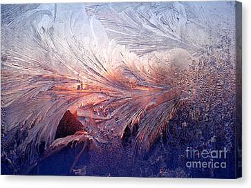 Frost On A Windowpane At Sunrise Canvas Print by Thomas R Fletcher
