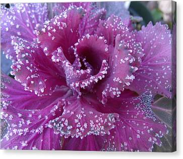 Frost On Kale Canvas Print