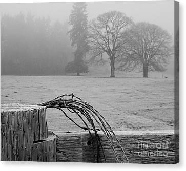 Frost On The Fence Post Canvas Print by Chuck Flewelling