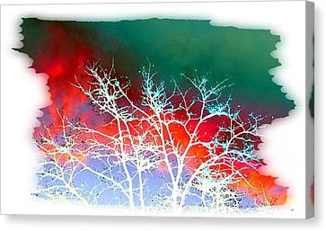 Frost Shrouded Tree Canvas Print by Will Borden