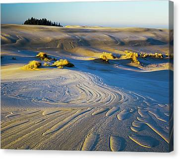 Frost Turns The Sand White Canvas Print by Robert L. Potts