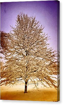 Frosted Branches Canvas Print by Marty Koch