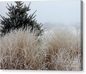 Frosted Grasses Canvas Print by Debbie Hart