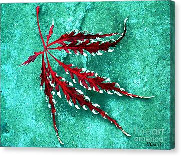 Frosted Japanese Maple Canvas Print by Nina Silver
