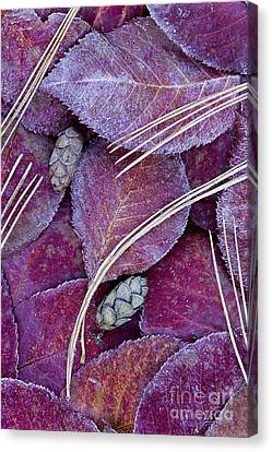 Frosted Leaves Canvas Print by Alan L Graham