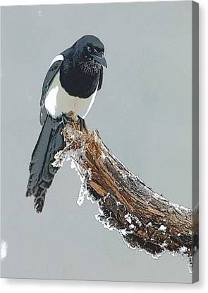 Magpies Canvas Print - Frosted Magpie- Abstract by Tim Grams