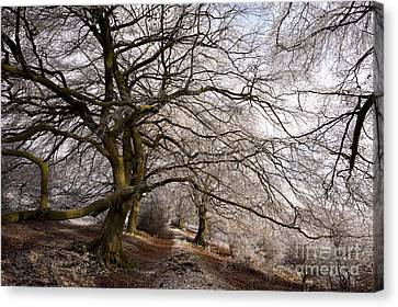 Frosted Path Canvas Print by Anne Gilbert