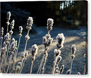Frosted Canvas Print by Ronda Broatch