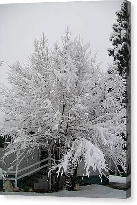 Canvas Print featuring the photograph Frosted Tree by Jewel Hengen