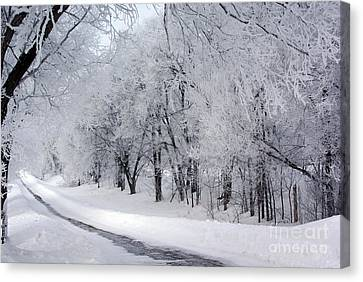 Frosted Trees Path Canvas Print