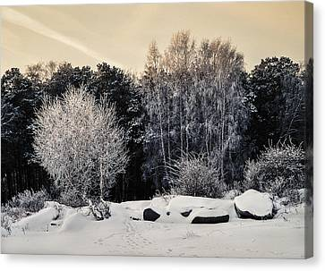 Frosted Trees Canvas Print by Vladimir Kholostykh