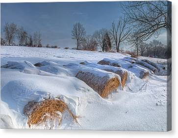 Winter In The Country Canvas Print - Frosted Wheat by Bill Wakeley