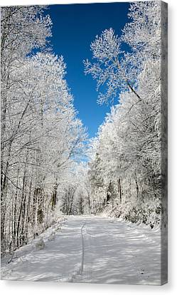 Frosted Winter Canvas Print by John Haldane