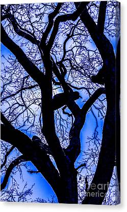 Frosty Blue Abstract Canvas Print by Mitch Shindelbower
