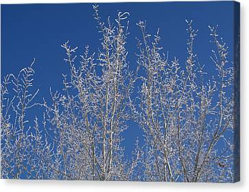 Frosty Blue Sky Canvas Print