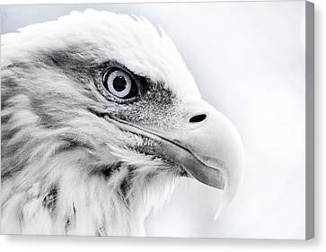 Frosty Eagle Canvas Print by Shane Holsclaw