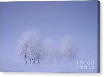 Frosty Friends Canvas Print by Dan Jurak