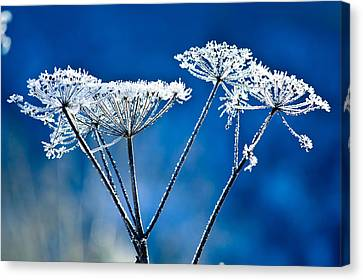 Frosty Light Canvas Print